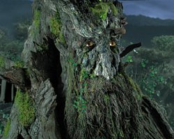 Image of Treebeard, from LOTR